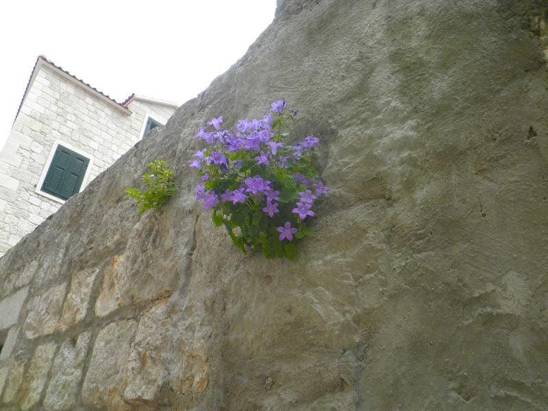 Flowers and stone