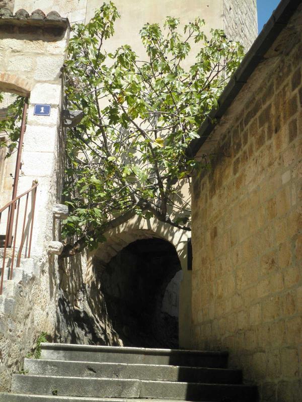The fig tree passage