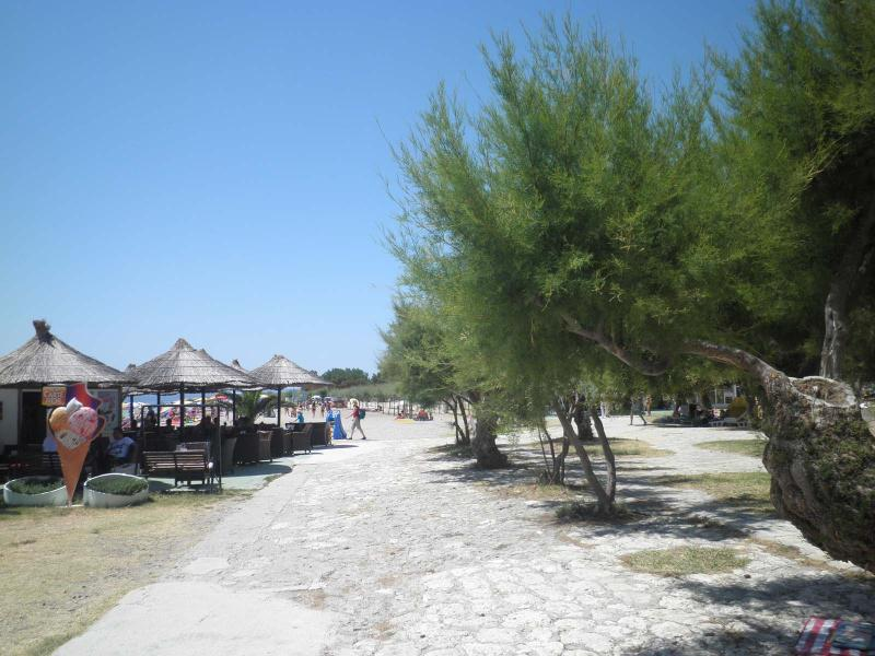 Tamarix trees