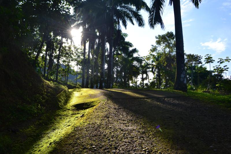 2km paved private driveway makes it easy to jog or just explore the rain forest