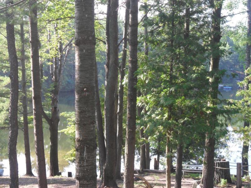 Enjoy the woods
