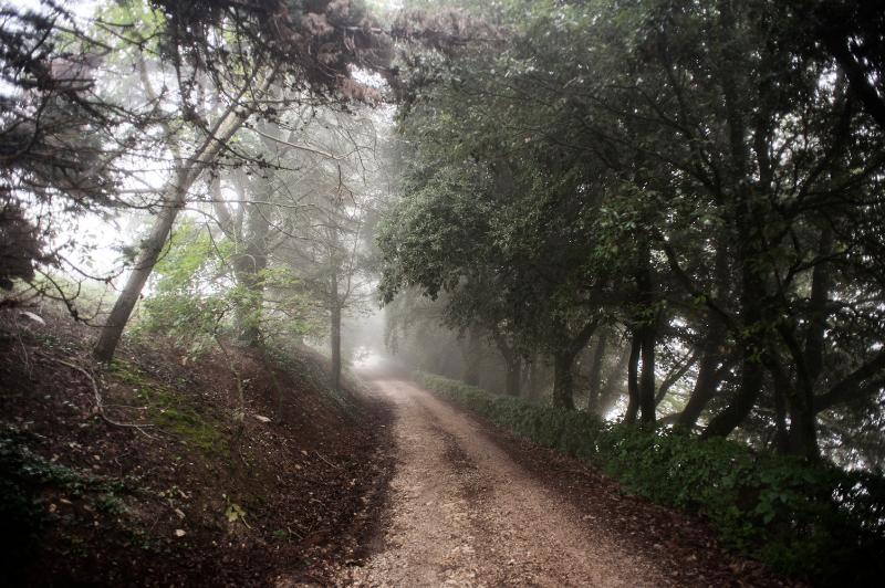 The road into our wood