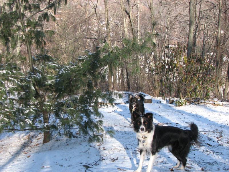 Atención todos los perros. Dile a tus 2 compañeros patas que amas también jugueteo en la nieve!!