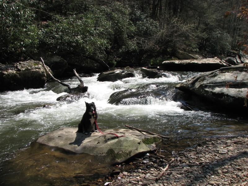 A lo largo del valle que mira desde la cubierta es el hermoso y relajante Jonathan Creek