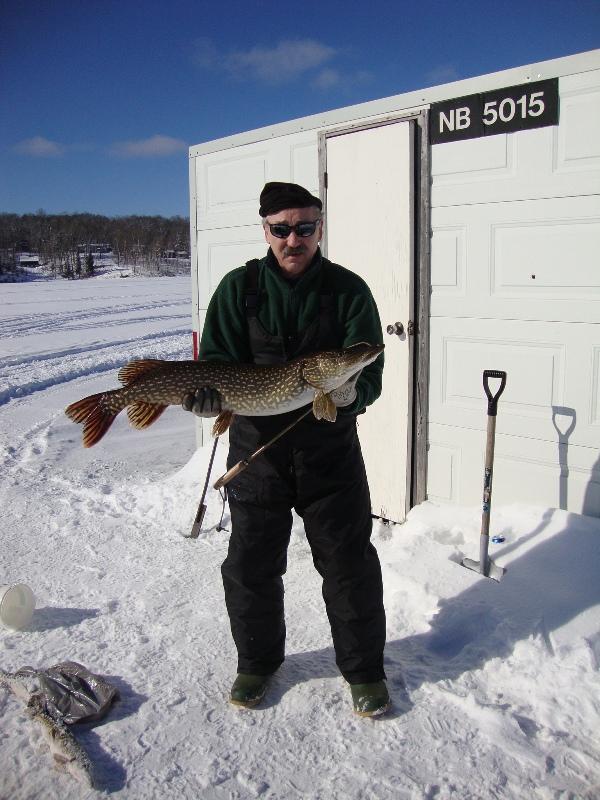 15 lb northern pike