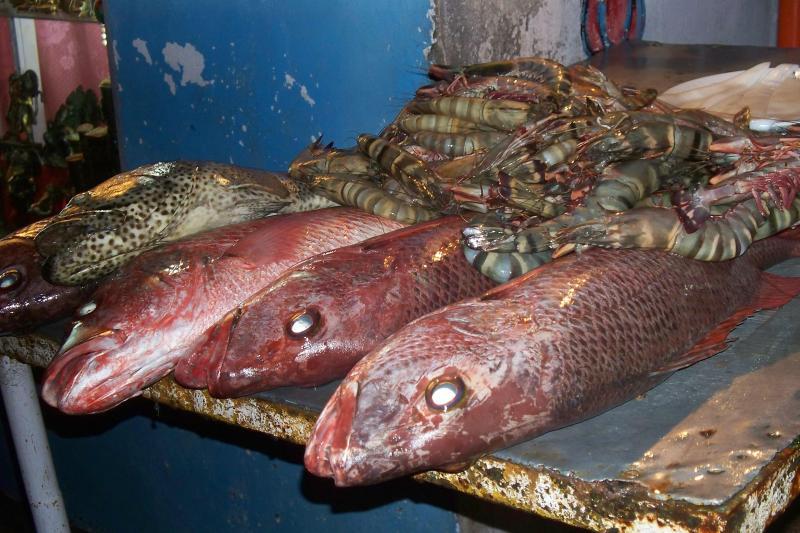 fresh fish  in the seaside restaurants