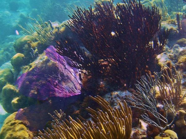 Underwater in front