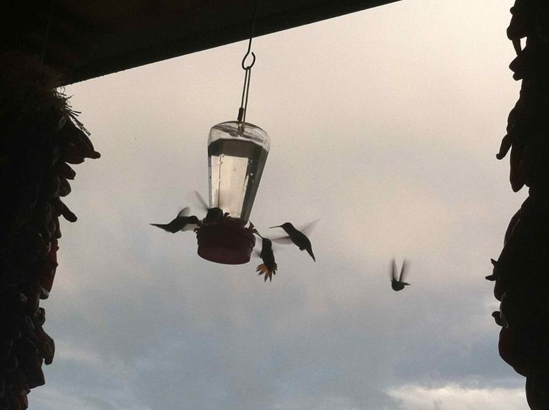 Hummingbirds on the porch
