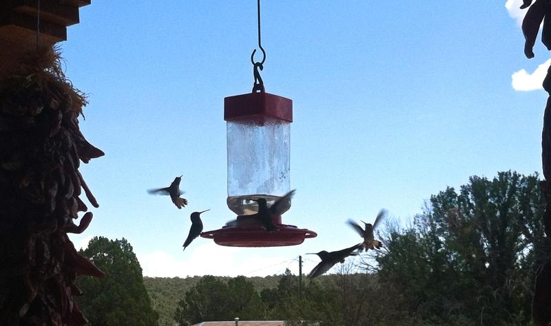More delightful buzzing hummingbirds
