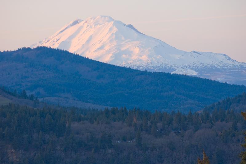 Monte Adams desde balcón, Rosa AlpenGlow Sunset