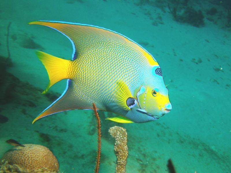 Bonaire underwater, the queen of Bari Reef