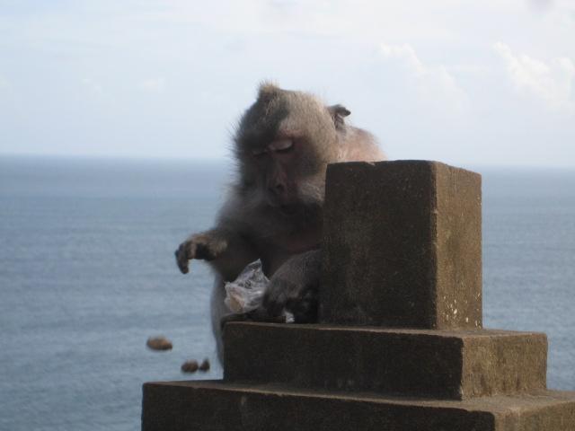 Balinesiska monkey