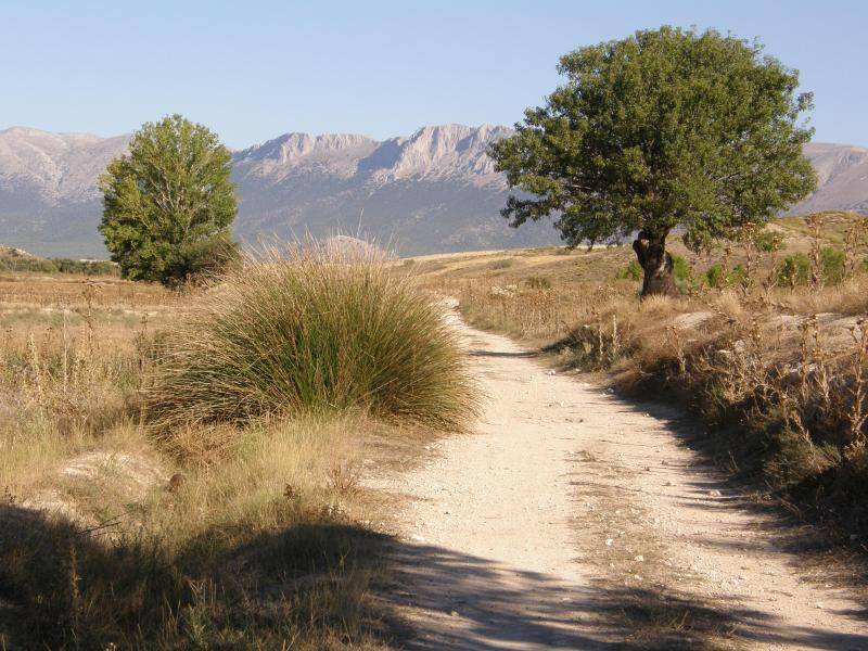 Walking track to the mountains