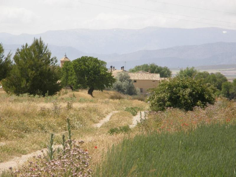View to the Cortijo