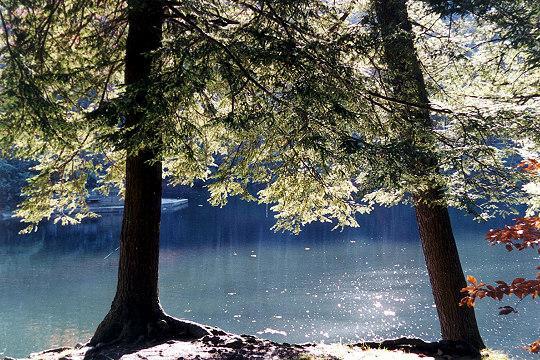 Walk to Lake at Neighboring State Park