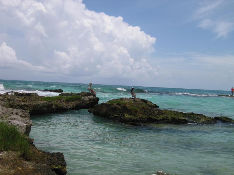 Tulum beach with Pelicans