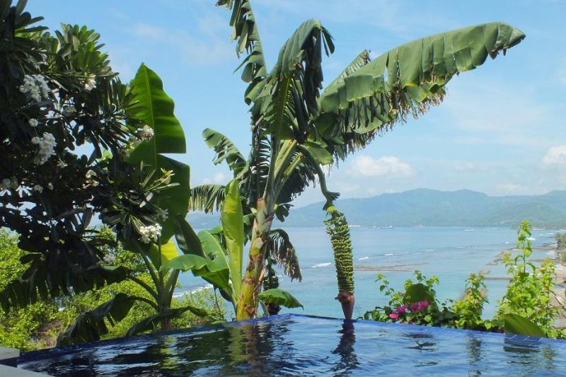 Banana tree near the pool