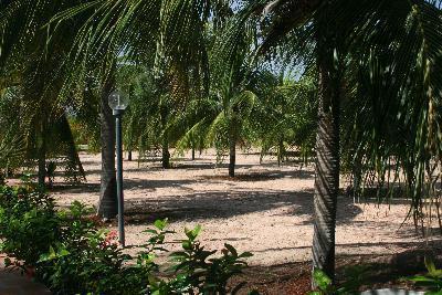 Jardin avec des arbres de noix de coco