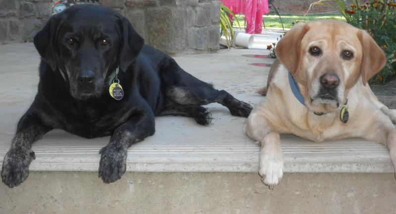 Our girls - Wags & Lilly