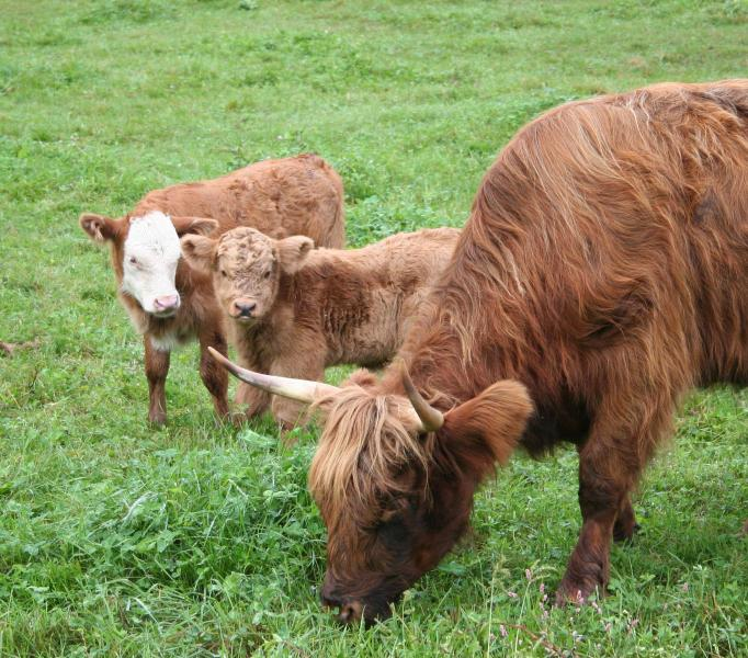 We have cattle for you to interact with during your visit.