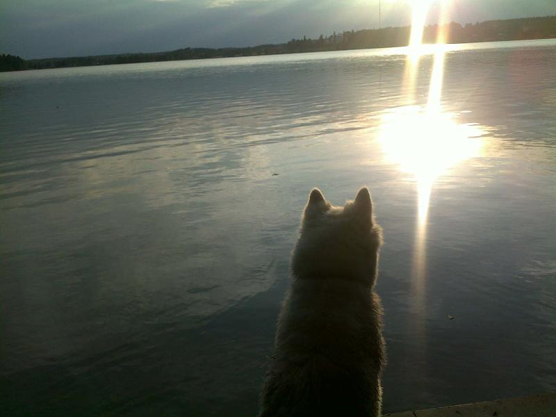 Tessu and the sunset.
