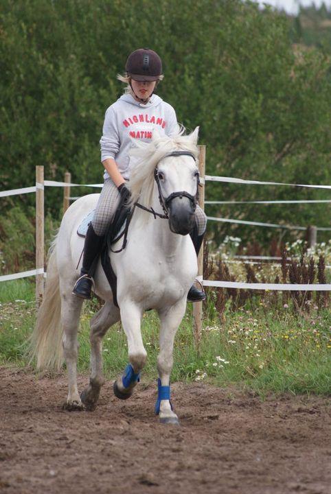 Nous pouvons organiser l'équitation / poney. Les débutants aussi.