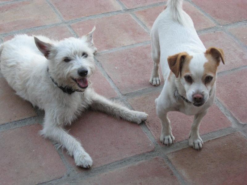 Tommy & Honey våra vänliga hundar