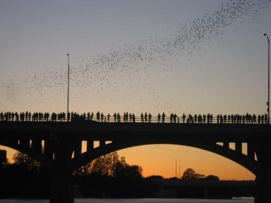 Neem een avondwandeling langs Zuid-Congres aan de Zuid-Congres brug om te zien de vleermuizen!