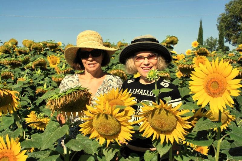 Sonnenblumen um