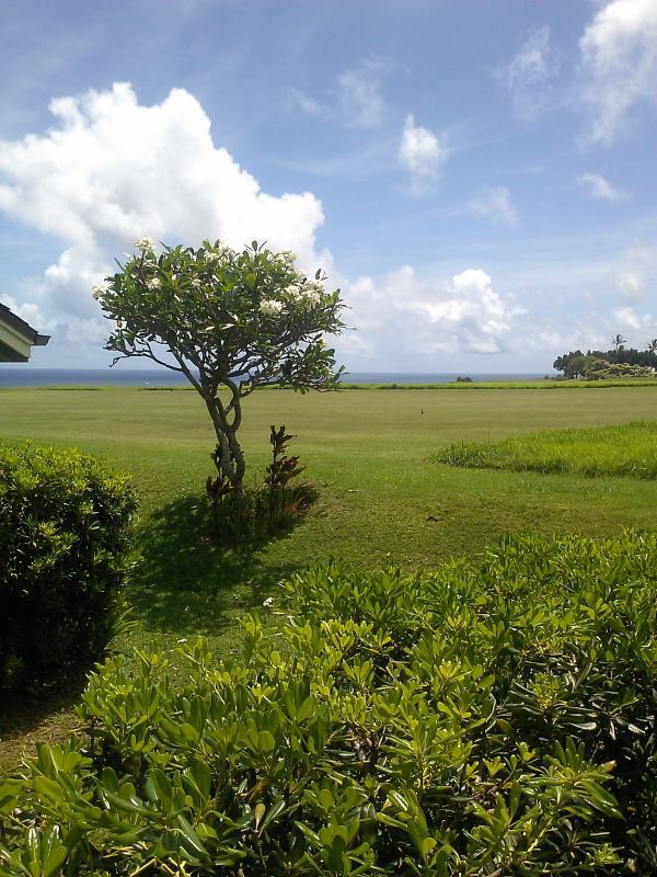 backyard golf course and ocean bluff