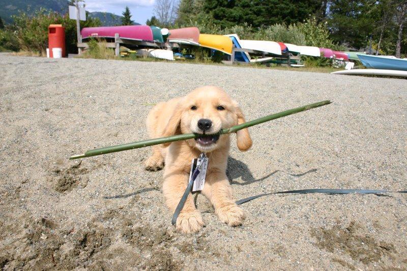cachorro de playa