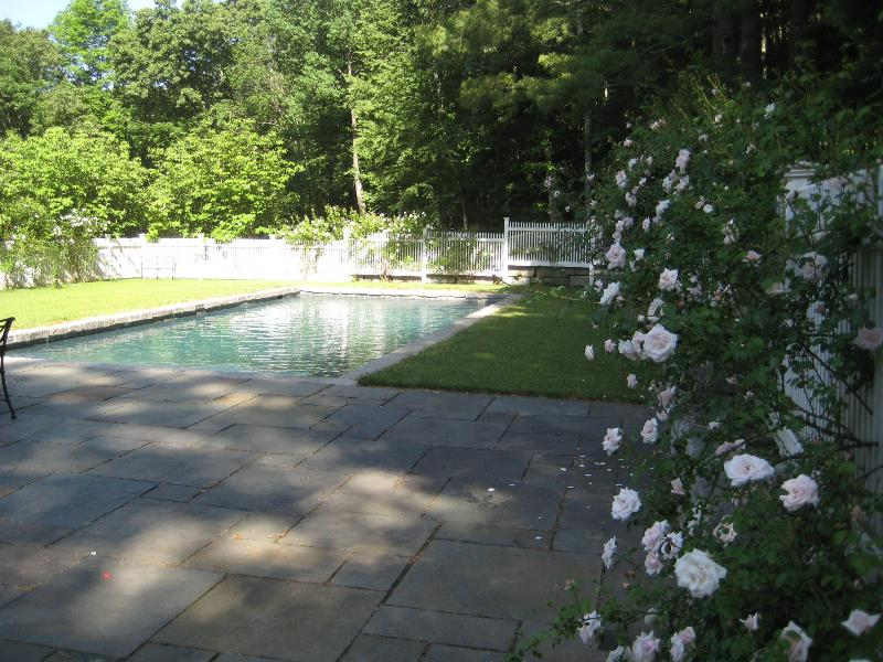 Heated Pool Surrounded with new dawn roses and flowering Dogwoods