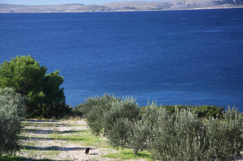 oliveraie Zizanj vue vers les Kornati