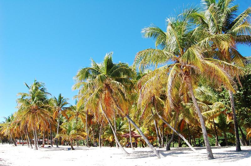 Beach in Guadeloupe