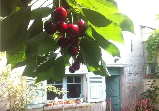 If you are visiting late June-This is what you should find. Help yourself to Raspberries & Cherries.