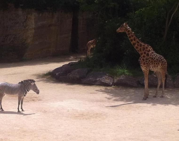A World class zoo at Douè la Fontaine, (45 minutes drive from the cottage).
