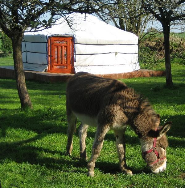 Emy, un de nos ânes