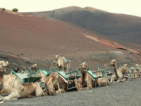 Up for a camel ride in the Timanfayan Natural Park?