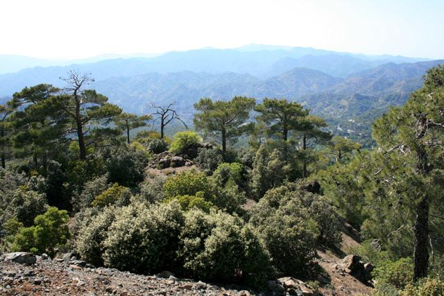 The rugged splendour of the Troodos Mountains