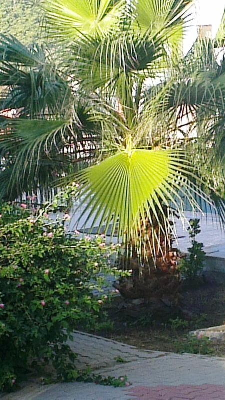 Parte del jardín