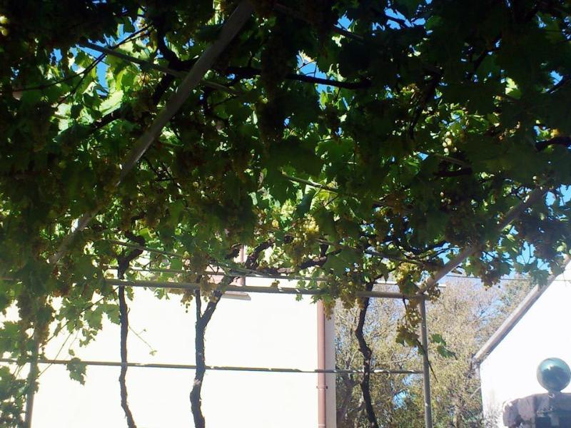 Vines provide shade on hot summer days