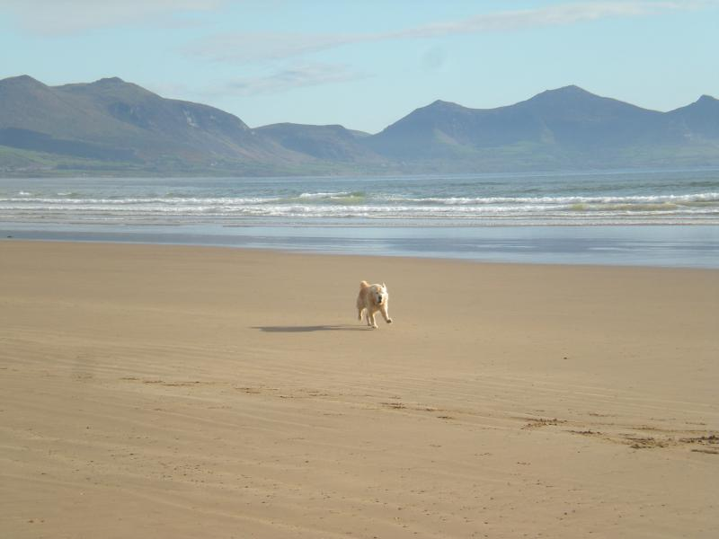 Dog friendly beach 300 yrds walk from the property