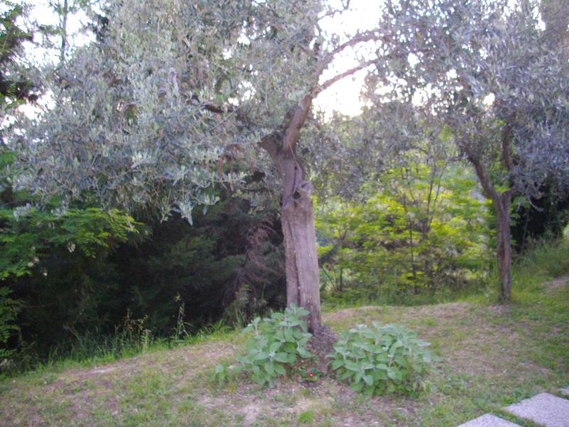 il nostro giardino...pace e tranquillità!