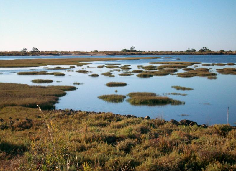 Part of the Ria Formosa