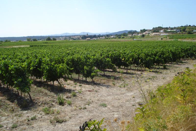 Vineyards extend right to the edge of  St Genies de Fontedit and beyond to the Haute Languedoc
