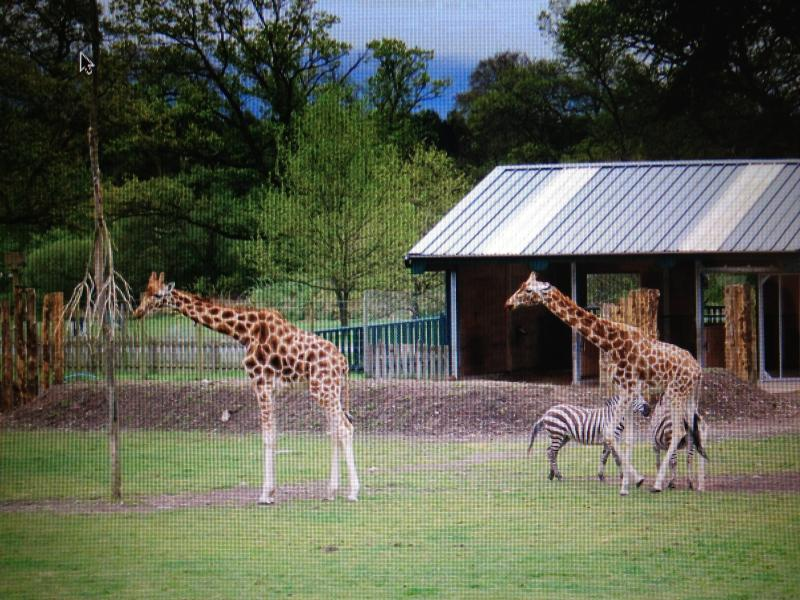 Some of the wildlife at nearby Blair Drummond Safari Park (5 mins drive open Mar-Oct)
