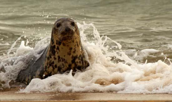 Don't miss a Seal trip