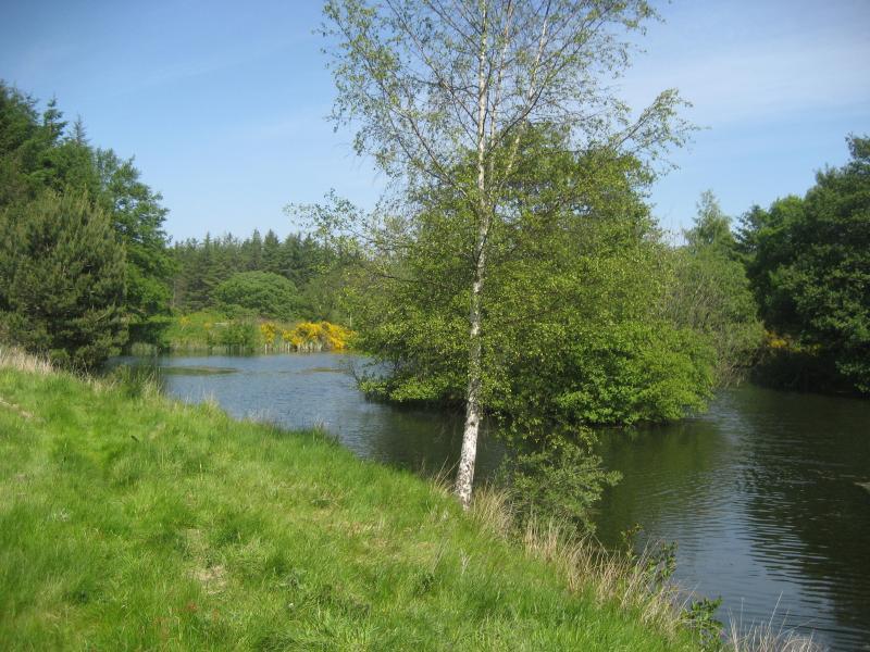 Walk around Springburn loch