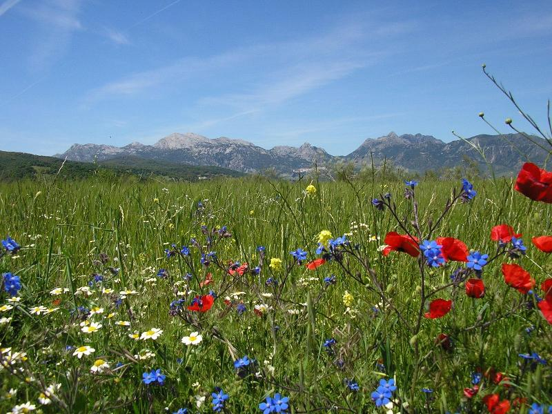 Andalucian wild flowers