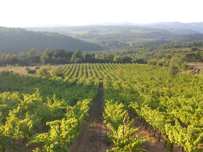 Vineyards around Paguignan